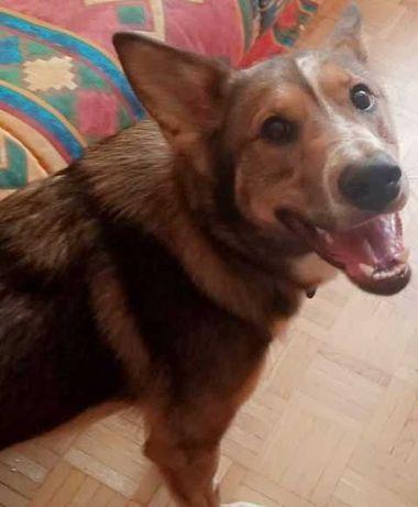Dyzio roczny psiak szuka domu