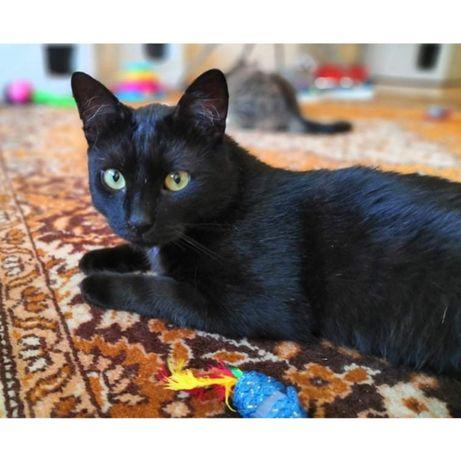 Czarny kotek milutki i wesoły. Kastr, szczep. FIV + błaga o domek.