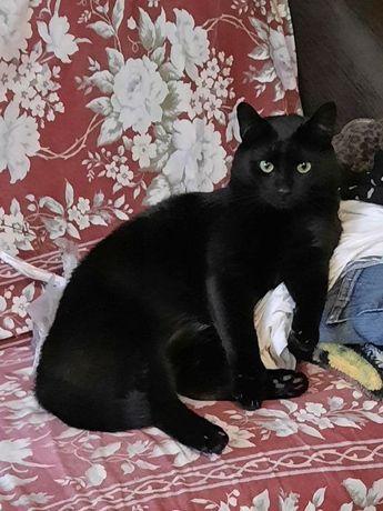 przyjazny i miziasty koceurek do domu z innym kotem