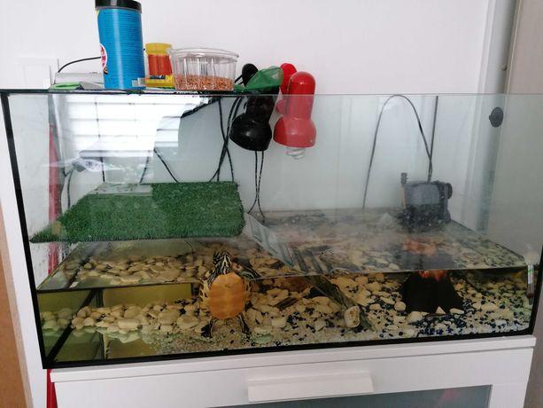Akwarium dla żółwia z wyposażeniem
