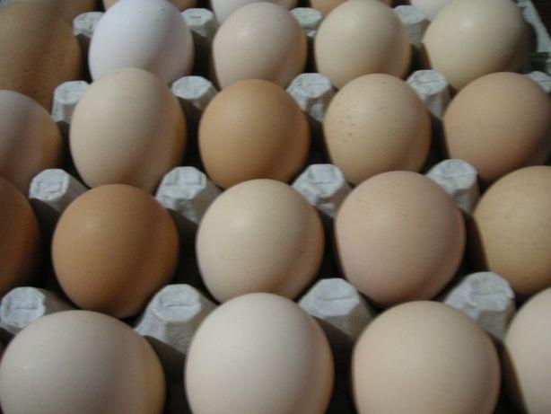 Jaja jajka ekologiczne od kur z wolnego wybiegu mojego gospodarstwa