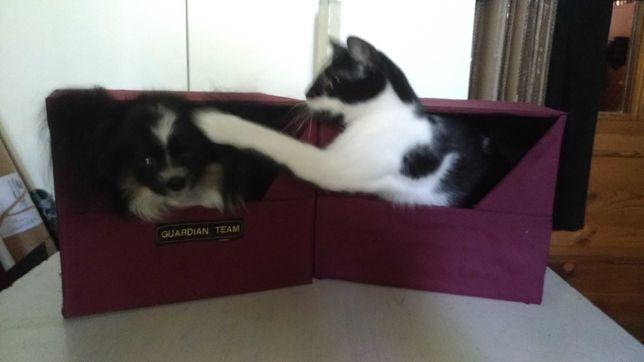 Domek dla kota psa Legowisko budka nowe eleganckie różne rozmiary