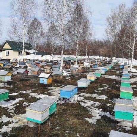 Сезонные скидки! Спокойная жизнь Желающим Порода пчел –Карника