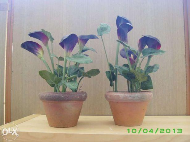 Planta SIA - vaso com jarros