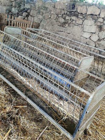 Manjedoura para ovinos e caprinos