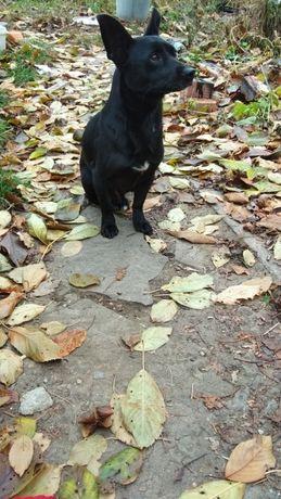 пропал пес