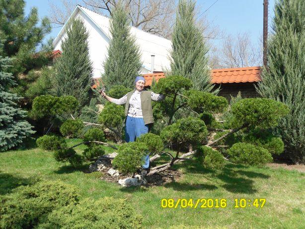 Профессиональный садовник. Комплексное обслуживание частных усадеб