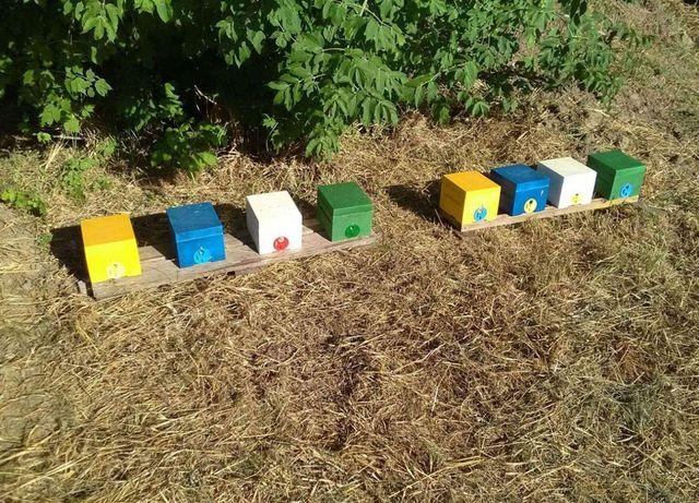 Пчеломатки (Плодная матка) Скленар (Карника)