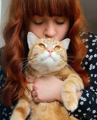 Petsitter, catsitter, opieka nad kotami- usługi petsitterskie