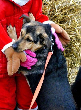 Cudowny zdrowy piesek kastrat do domu adopcja radosny 4 letni  psiak