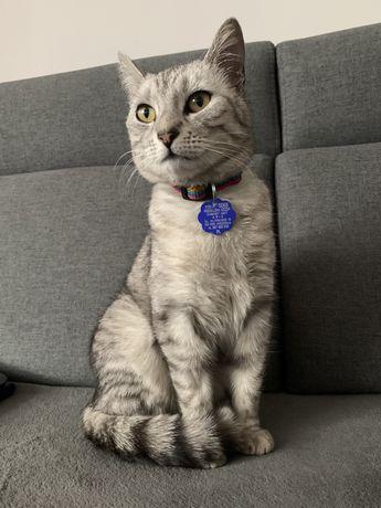 Zagineła szara kotka! Obłaczkowo/Wrześna/Chwalibogowo
