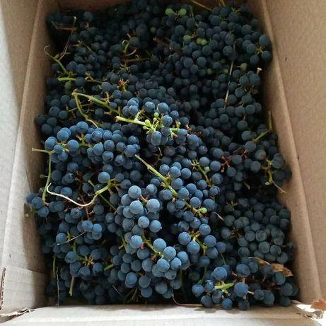 Продам виноград с. Выгон
