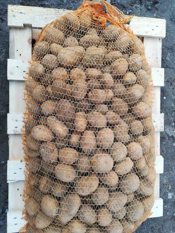 Ziemniaki wielkość sadzeniaka