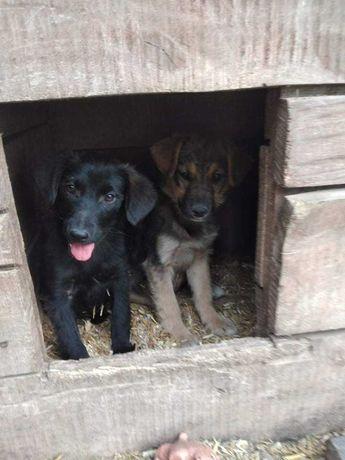 Nora i Lotka czekają na domy