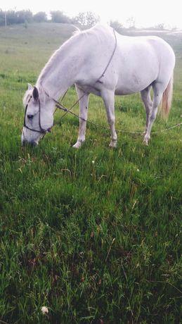 Лошадь   ласковая