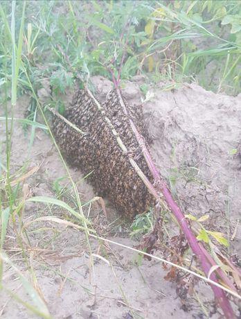 Usuwanie pszczoły