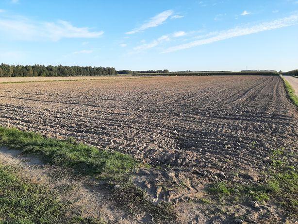 Ziemia rolna 5.4 h Zambrzyce  Kapusty