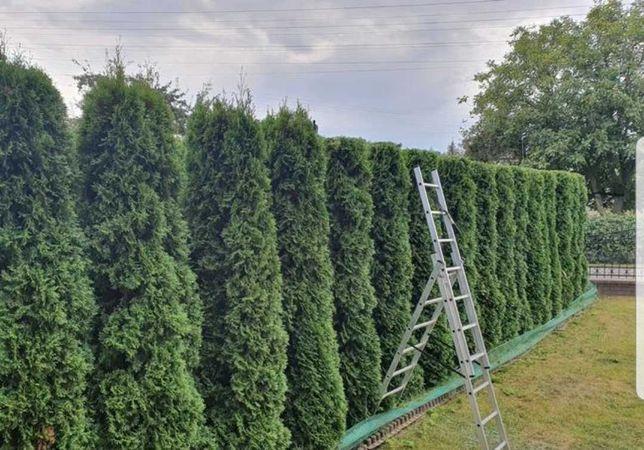 USŁUGI OGRODNICZE - Pielęgnacja ogrodu przycinanie tui, koszenie trawy