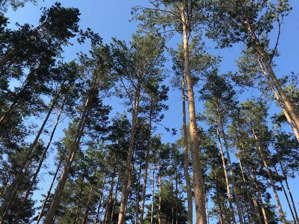 Продам участок в Буче лесной 10 соток под строительство