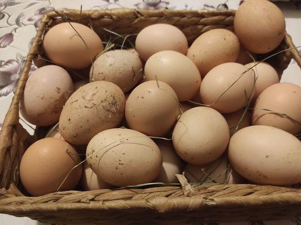 Jajka wiejskie od kur z domowego chowu
