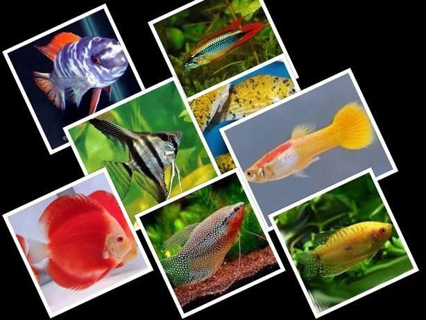 Ryby akwariowe ponad 500 gatunków w ofercie tczew
