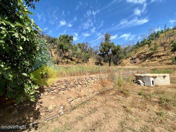Terreno Rústico em Monchique  Rustic Land in Monchique