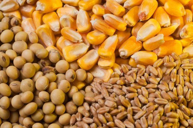 Комбикорм,пшеница,ячмень,кукуруза,отруби.Семена,суданка,люцерна,зерно.