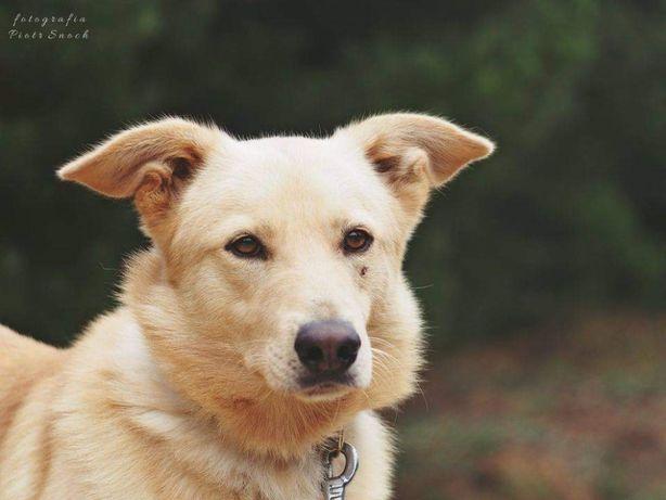 Wyścigowy- pies z bagażem złych doświadczeń