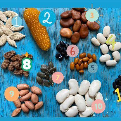 Набір насіння (вігна, чуфа, кукурудза - попкорн, бебі-корн, арахіс)