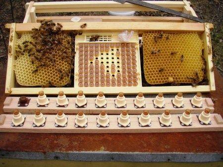 Бесплатная доставка! Система вывода маток пчел, аналог Никот