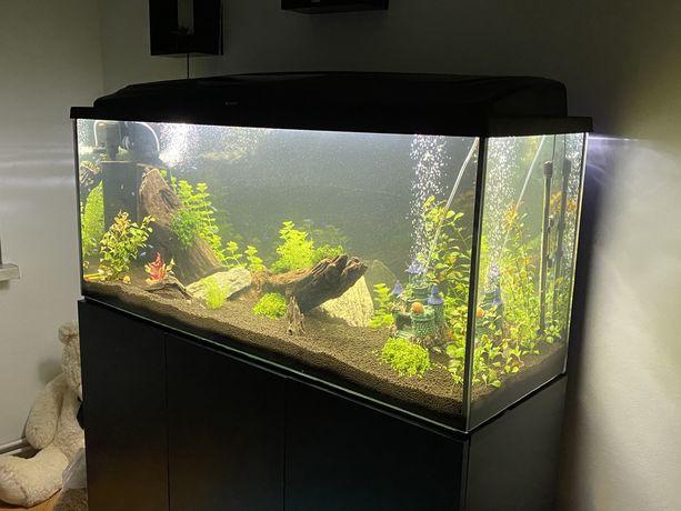 Zestaw akwariowy 240 L + wyposażenie + szafka