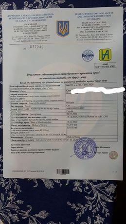 Ветеринарная клиника на Тополе-1,2,3., документы на выезд