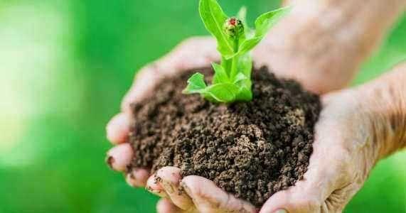 Terreno para agricultura