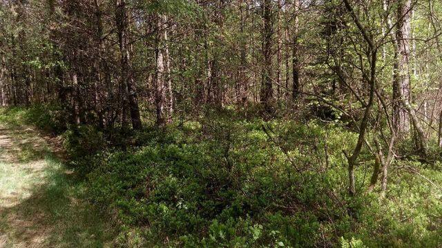 Działka z własnym lasem