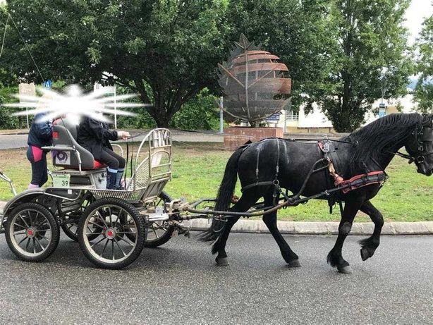 Cavalo Pura Raça Frison