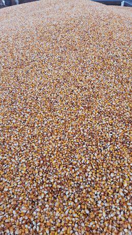 Кукурудза 15% 5800 грн