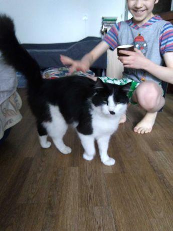 Кот-красавец ищет дом