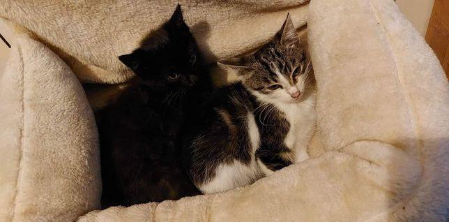 Kotki czekają na domek