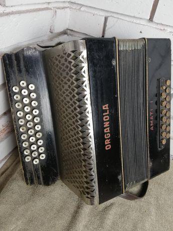 Organola Amati I. Akordeon guzikowy.
