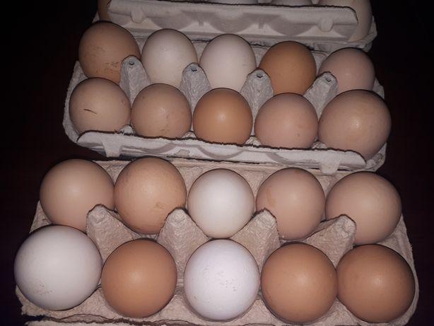 Jaja kur swojskich z wolnego wybiegu