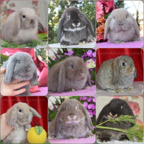 """Крольчата из питомника """"Fluffy Diamond""""Кролики по настоящему маленькие"""
