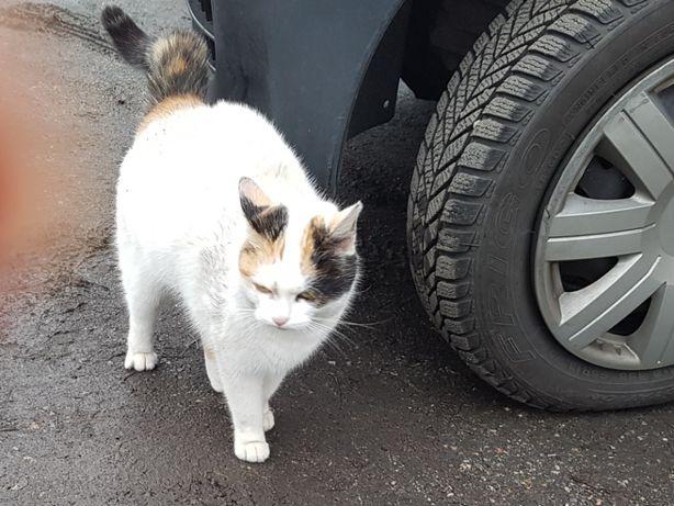 Czy ktoś pokocha bezdomną kotkę.