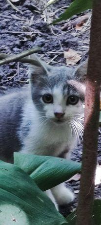 Котик,кошка ,котята ждут своего хозяина