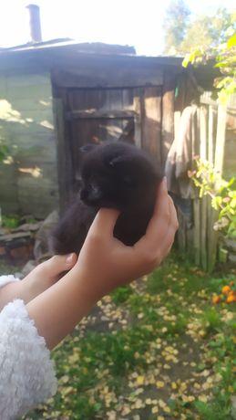 Котята обычные Красивые