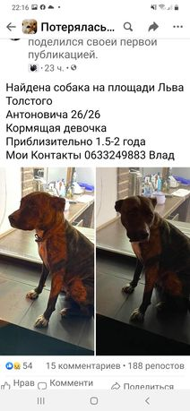Найдена собака пит или стаф Киев