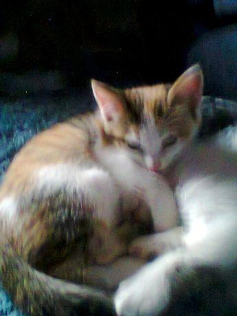 Котята от кошки-умницы
