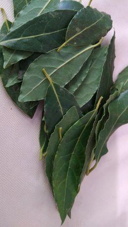 Folhas de louro 10g