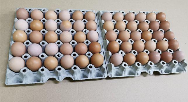 Jajka wiejskie od młodych kurek