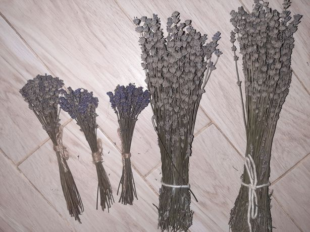 Сухой букет лаванды собранная в агусте
