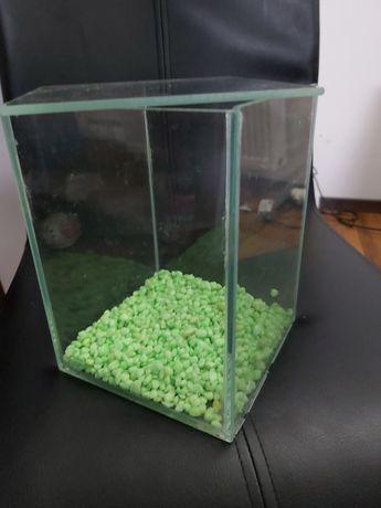 Akwarium dla rybki + roślina kamienna